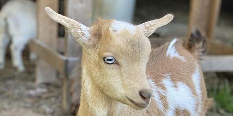 Goat Yoga Nashville- Jubilant June tickets