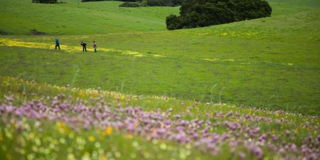 Guided Virtual Hike: Spring Wildflowers 5-18-21 tickets
