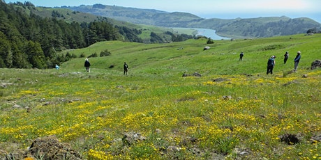 Guided Virtual Hike: Spring Wildflowers 5-20-21 tickets