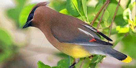 Young Birders Palmer Park Bird Walk tickets