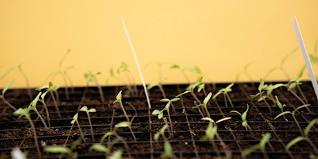 The Seed Saving Network Transplanting Troubleshooting tickets
