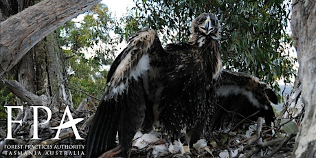 Introduction to Tasmanian eagles tickets