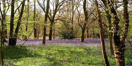 Blue bell walk in Old Park Wood tickets