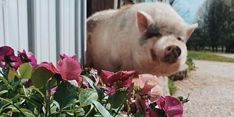 Mother's Day Outing at Oinking Acres tickets