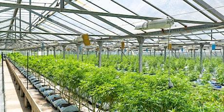 Entrepreneurs Blazing A Trail In The Legal Cannabis Market tickets