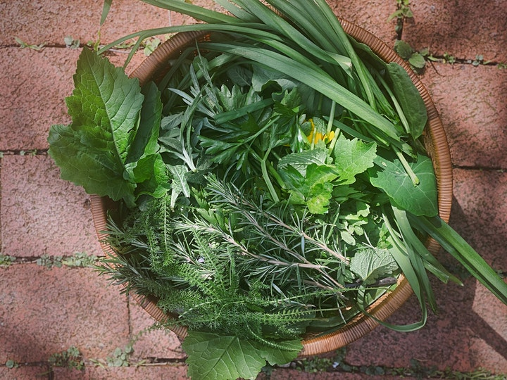 Forest Medicine: Wild Food & Herbal Medicine Walk image