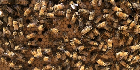 IN PERSON! Beginning Beekeeping: The Basics and Mid-Season Colony Health tickets