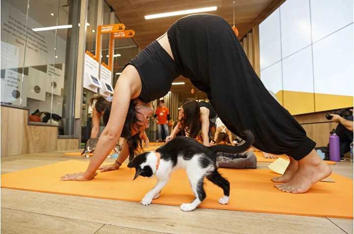 Kitten Yoga image