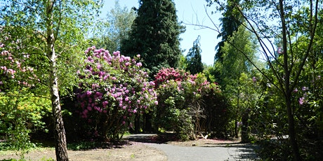 Rhododendrons in bloom at MHA The Wilderness tickets