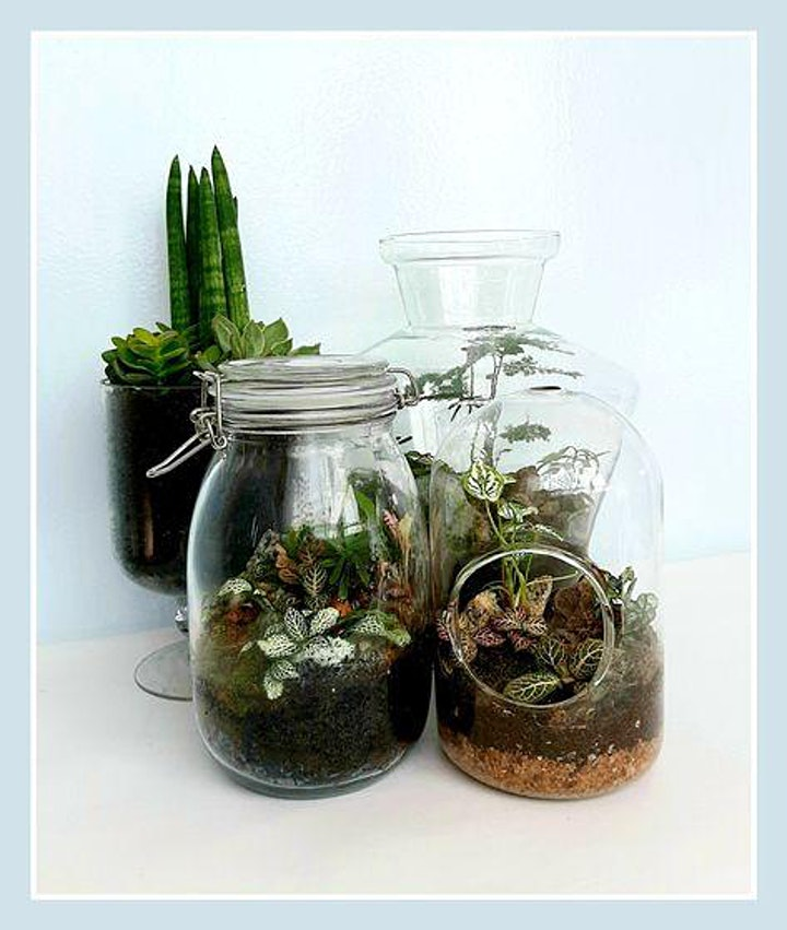 Art of Planting starts  June11  (8 sessions) image