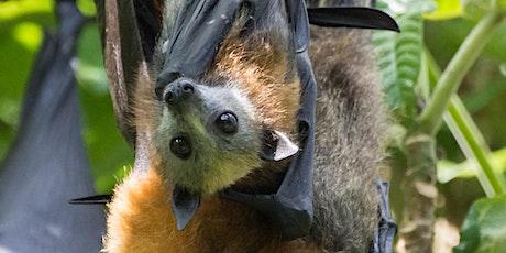 Meet a Bat in the Coffs Harbour Botanic Gardens tickets