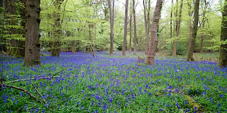 Ranmore Common to Polesden Lacey tickets