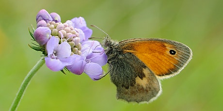 DLL: Butterfly and Moth Ecology Walk tickets