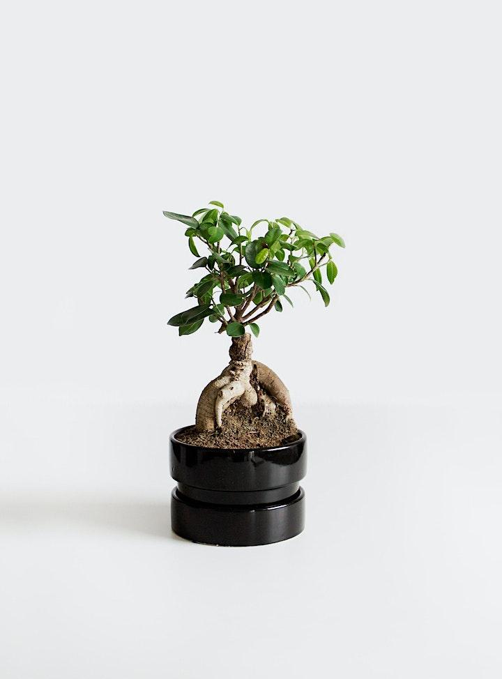 Intro to Bonsai Workshop image