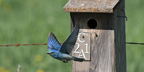 Build a Birdhouse with Jim Critchley tickets