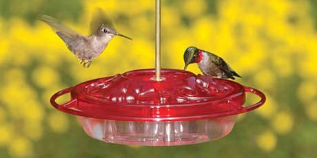 Hummingbirds-Flying Jewels tickets