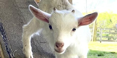Goat Yoga Nashville- July Jubilee tickets