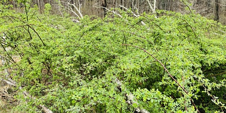 How to Identify and Remove Invasive Plants tickets