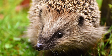Hedgehog Ecology and Surveying tickets