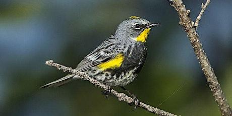 Migratory Bird Walk tickets