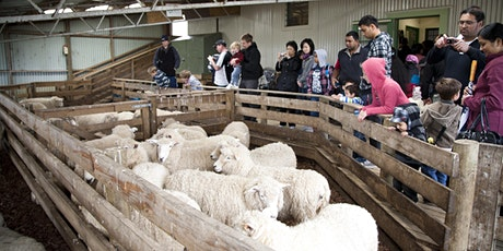 Ambury Shearing tickets