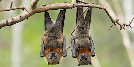 Firefly, Bat and Beaver Walk tickets