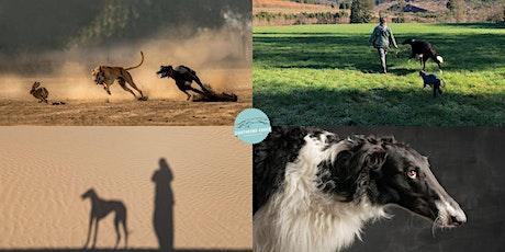 """Online-Seminar """"Windhunde verstehen"""" Teil 1 bis Teil 4 Tickets"""