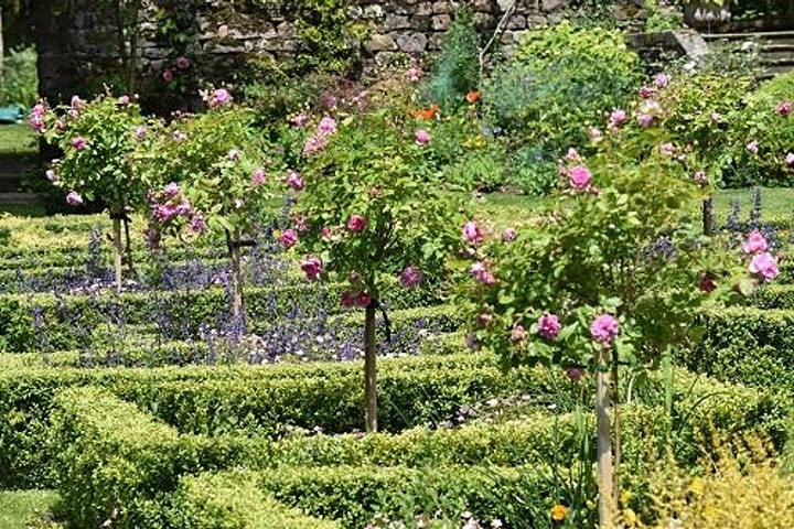 Browsholme Hall, Gardens and Tea Room image