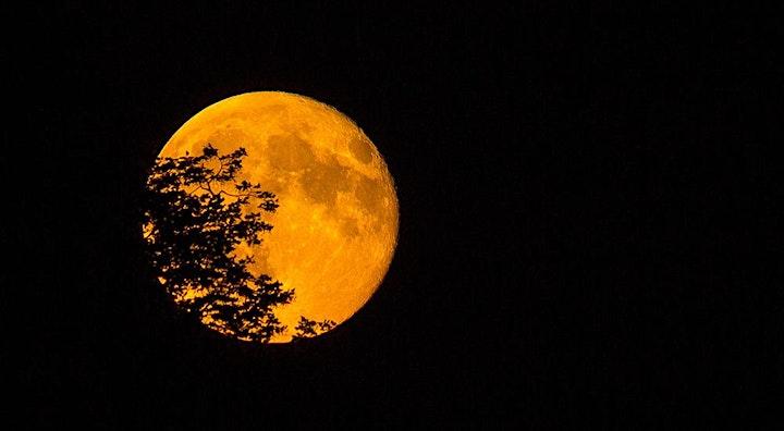 Der Supermond- Fotografieren im Mondlicht: Bild