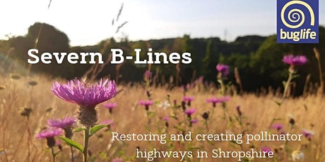 Shropshire's Pollinator Highways: An introduction to  Severn B-lines tickets