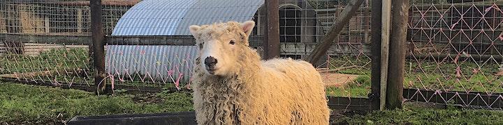 Lamb Bottle Feeding image