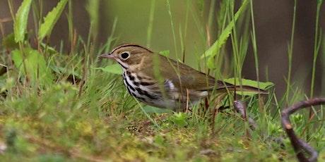 Towpath Trail Tremont Bird Walks tickets