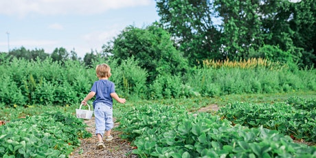 Planning and designing your urban vegetable garden tickets