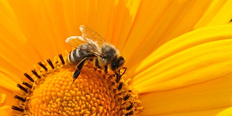Youth Climate Action Group - World Bee Day Meeting tickets
