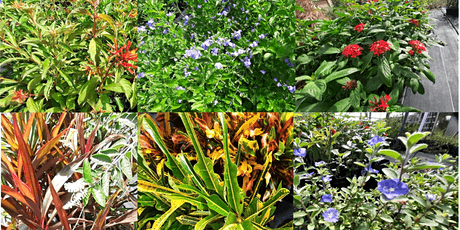 Florida-Friendly Landscaping™ Talk and Tour tickets