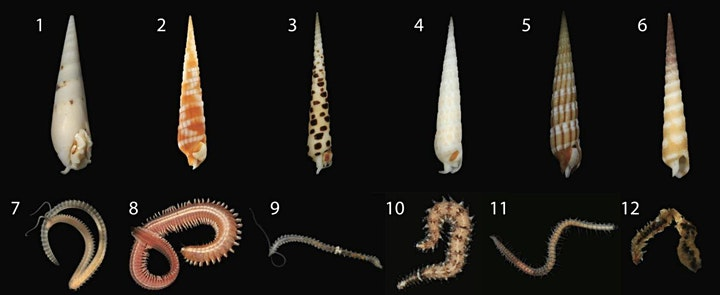 Public Forum - Killer Snails from Beach to Lab Bench to Bedside image
