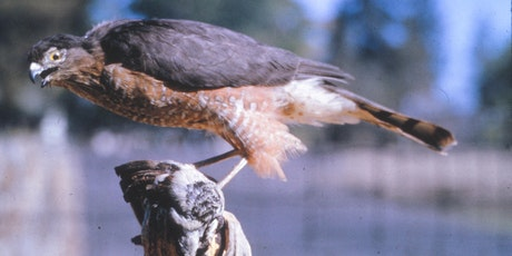Stanislaus National Forest Presents: Migratory Birds of the Western Sierra tickets