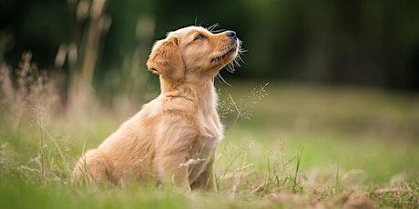 Sichere Bindung fördern bei Deinem Welpen und Junghund/ Online Vortrag Tickets