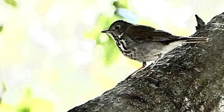Bird (and Botany!) Walks tickets