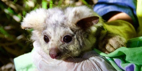 Life in the Canopy: Possums, gliders and other arboreal mammals tickets