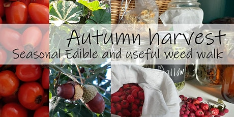 Autumn Harvest - Seasonal Edible and useful weed walk tickets