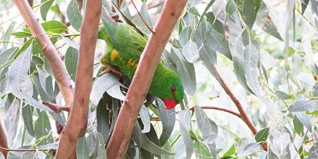 Bush Explorers - Birdwatching for Beginners - Mansfield Creek Reserve tickets
