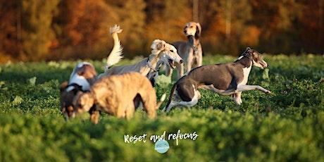 """Praxis  Tages-Seminar """"Windhunde verstehen"""" Teil 5  Präsenz oder online Tickets"""
