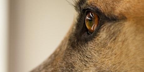 """Online-Seminar """"Windhunde verstehen"""" Teil 6  - Windhunde aus dem Tierschutz Tickets"""