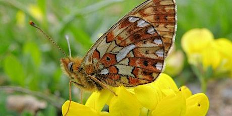 Pearls & Glories: Butterflies & Moths walk tickets