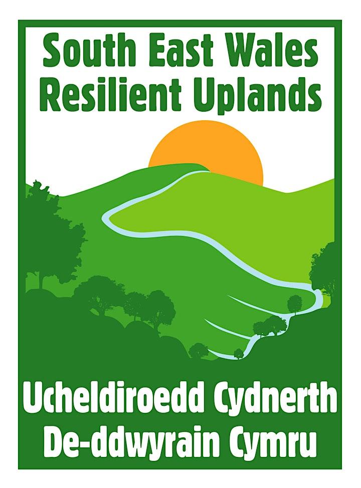 Upland habitats and plants identification image
