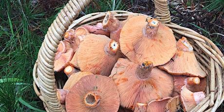 Mushroom Foraging 101-4 tickets
