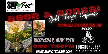 Gold Thread Cypress Bonsai at Puddler's Kitchen and Tap tickets