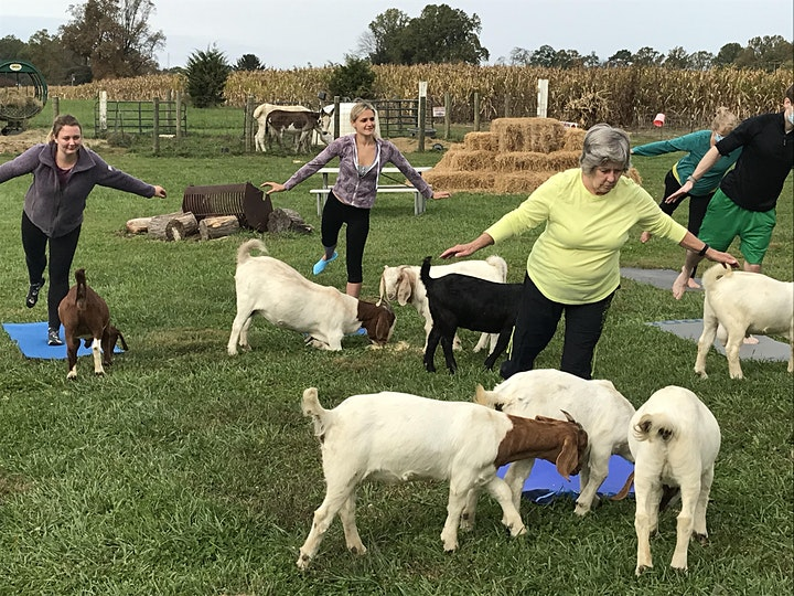 Yoga with Goats on The Farm image