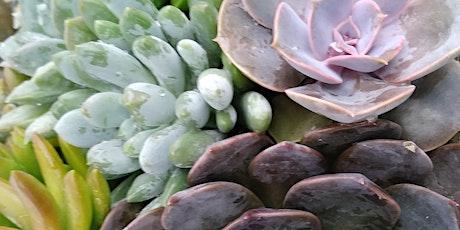 Succulent Garden Planter tickets